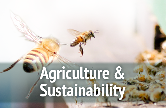 Agriculture and Sustainability